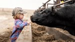 A child interacts with a steer on a Kansas family ranch