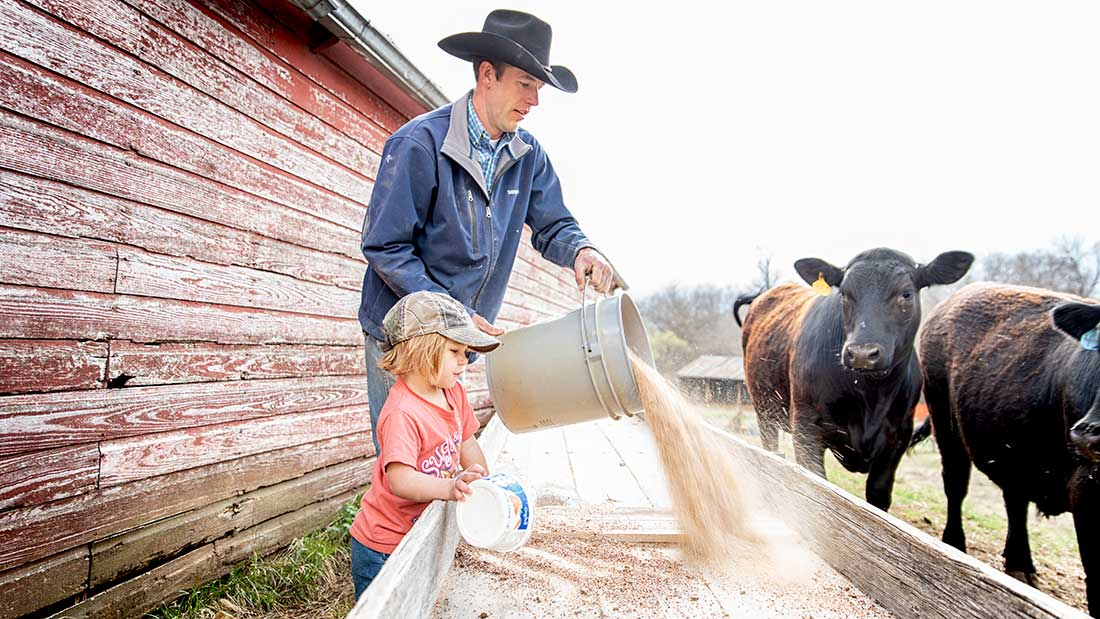 Kansas farm girl feeds cattle grain with father