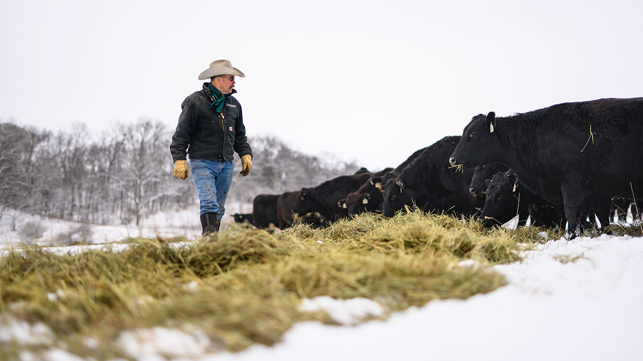 rancher checking on cattle during winter